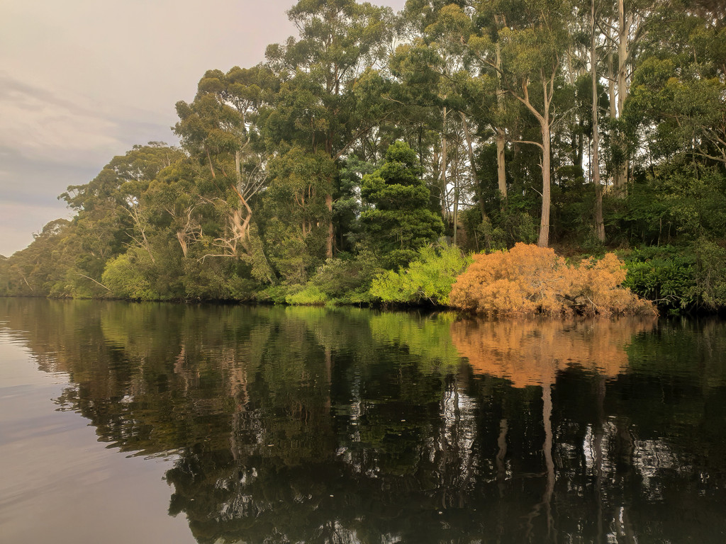 Foggy morning on Huon River by gosia