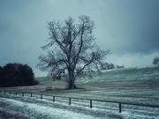 14th Jan 2020 - The seasons tree