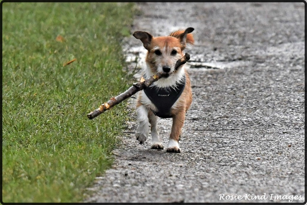Small dog big stick by rosiekind