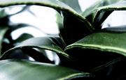 14th Jan 2020 - Leafy