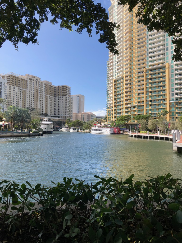 Fort Lauderdale's Water Taxi by frantackaberry