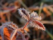14th Jan 2020 - Hairy Little Leaves