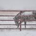 Kansas Blizzard