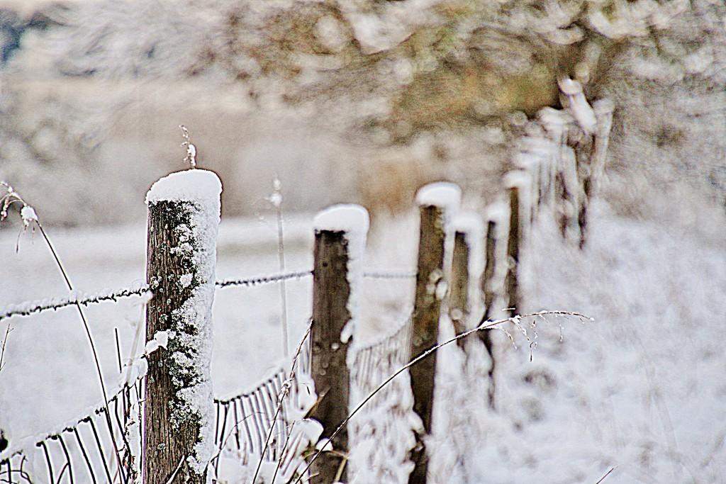 Fence  by lynnz