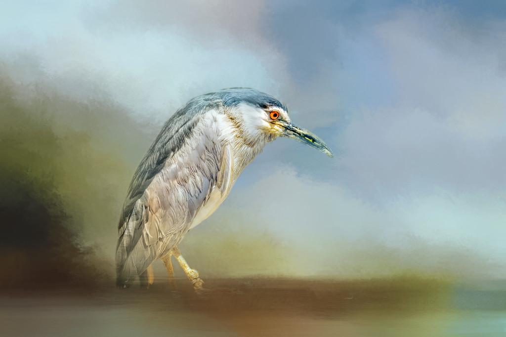 Heron by ludwigsdiana