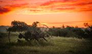 15th Jan 2020 - Rustic Sunset