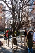 5th Dec 2019 - The surviving tree, Ground Zero