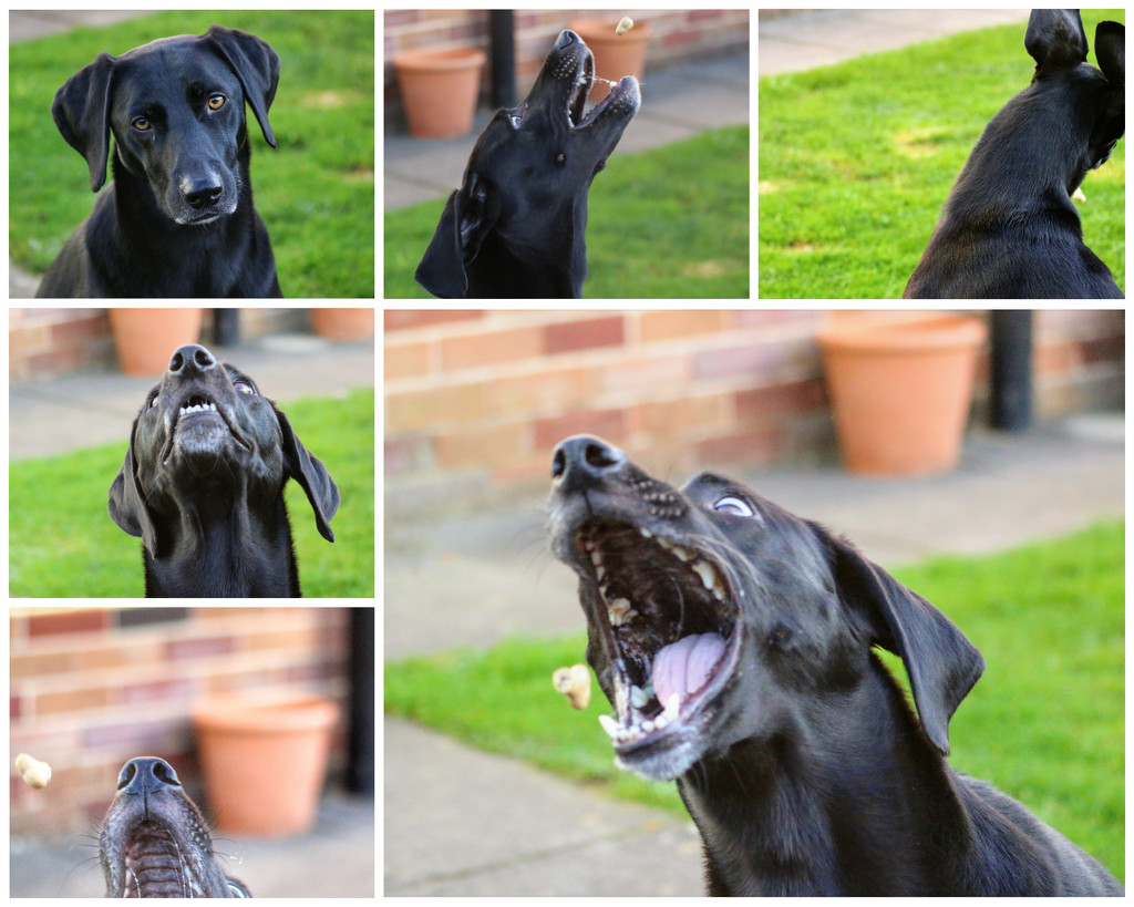 My hubby was asleep so thought I'd go in the garden and try some treat shots with Sadie by lyndamcg