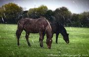 15th Jan 2020 - Horse power