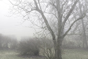 15th Jan 2020 - Foggy morning