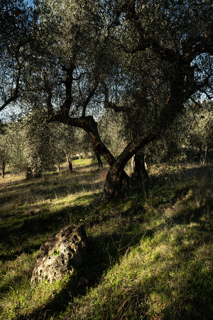 In the olive grove  by angelikavr
