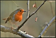 15th Jan 2020 - No wonder everyone likes robins