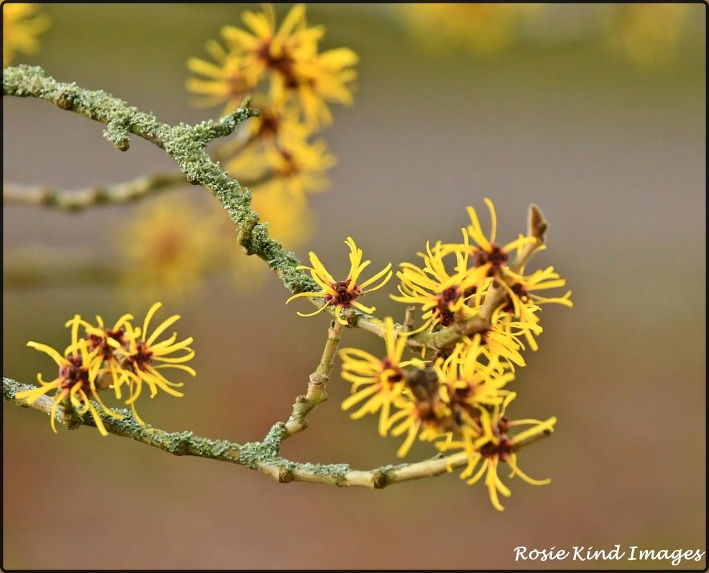 Signs of spring by rosiekind