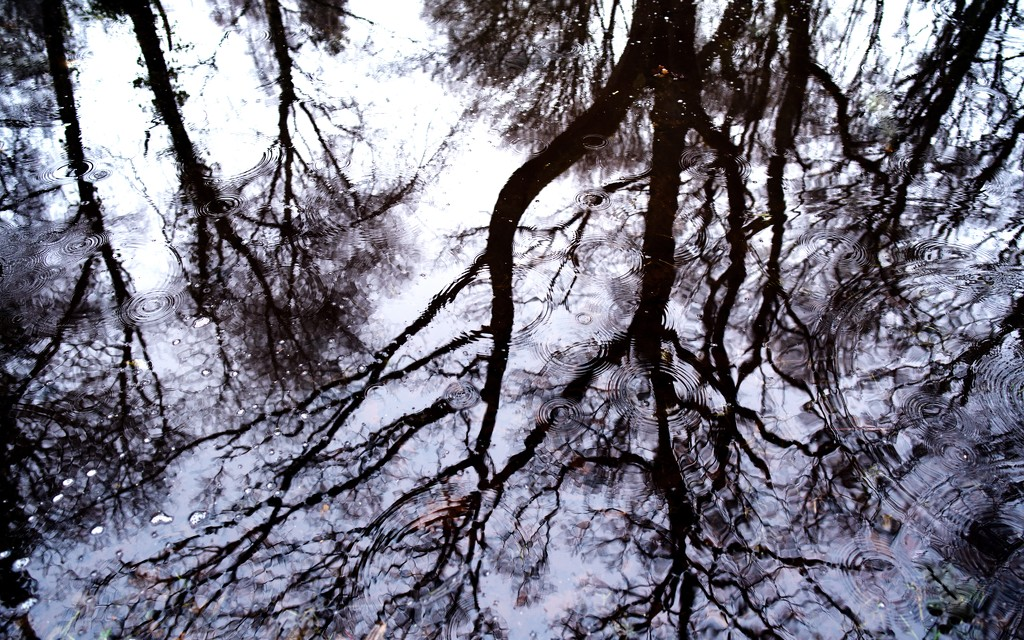 Droplets on reflection by moonbi