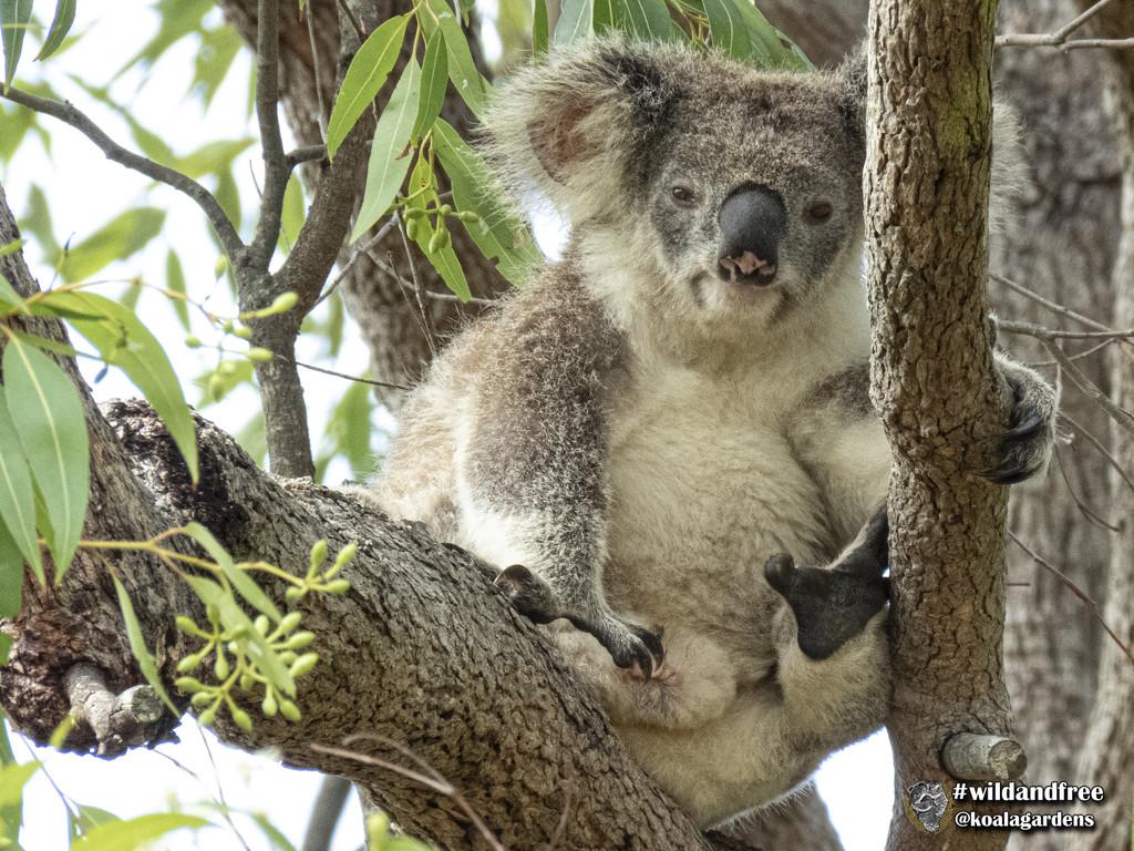 under pressure by koalagardens