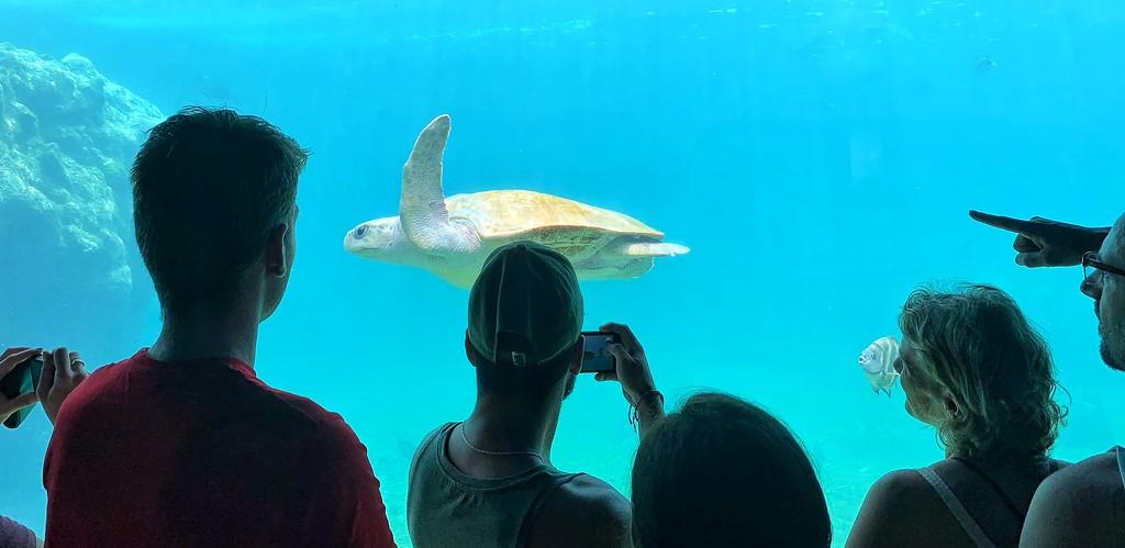 The star of the aquarium.  by cocobella