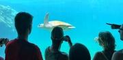 16th Jan 2020 - The star of the aquarium.