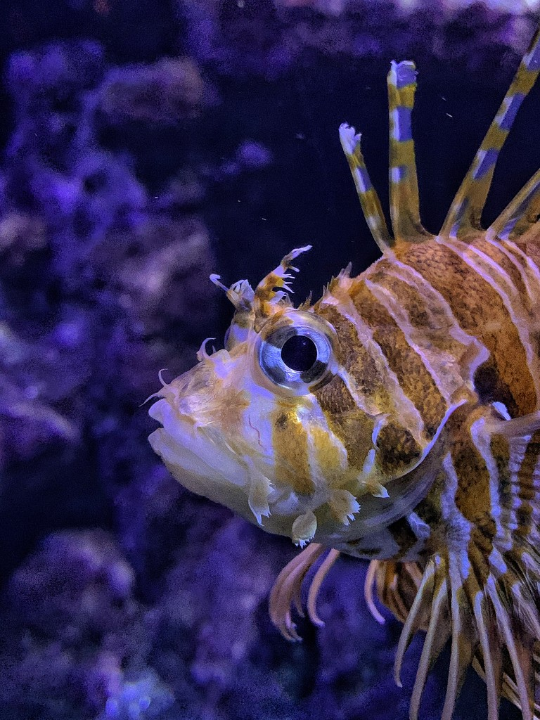 Fish. by cocobella
