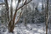 10th Jan 2020 - Winter in Nova Scotia