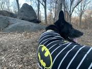 12th Jan 2020 - Batman on the prowl!