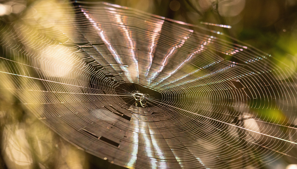 Spiderweb Bouncing in the Wind! by rickster549