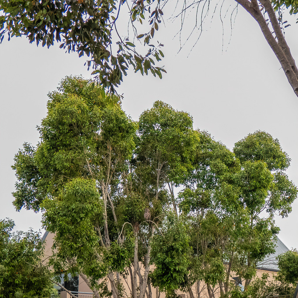The neighbours tree,  by ludwigsdiana