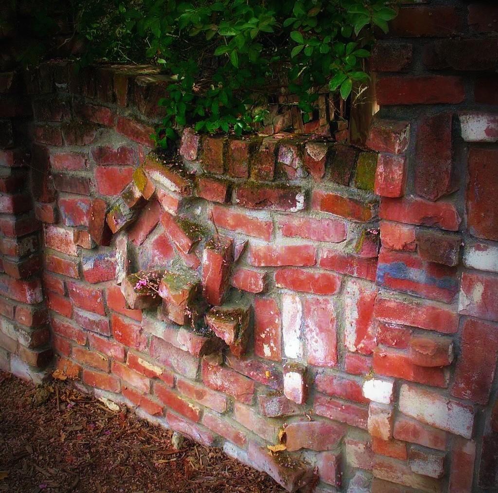 Brick Walls by gardenfolk