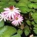 Wonderful Water Lilies