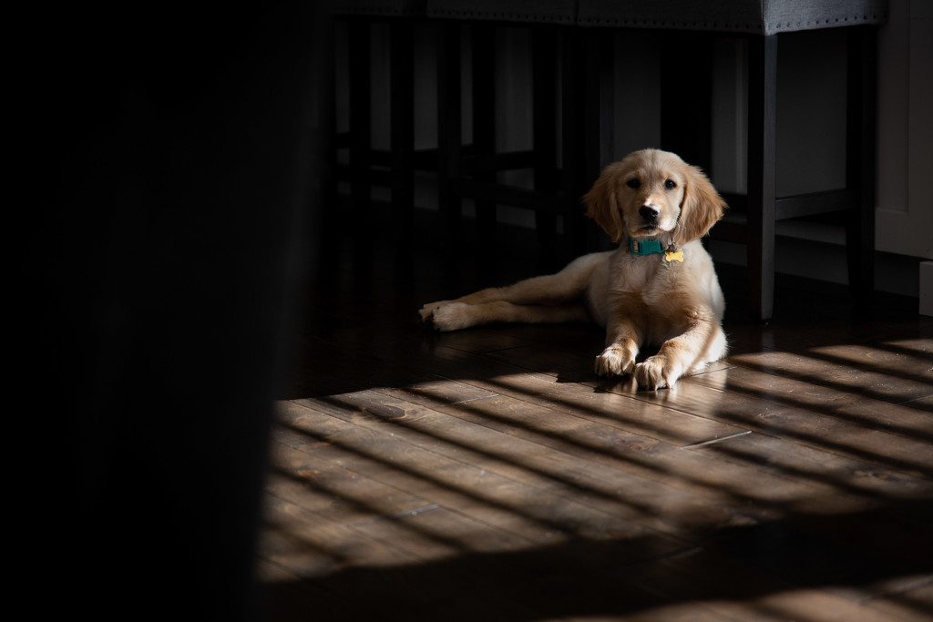Light and Pup by tina_mac