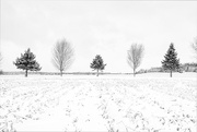15th Jan 2020 - Another Michael Kenna
