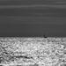 Lone Yacht