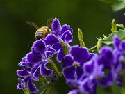 16th Jan 2020 - I've been stalking bees