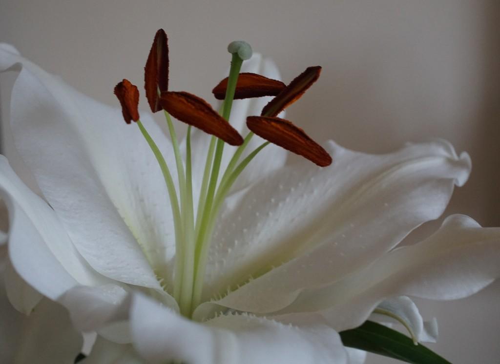 perfume by quietpurplehaze