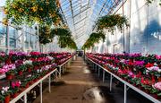 17th Jan 2020 - Winter Gardens