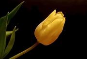 17th Jan 2020 - Mellow Yellow