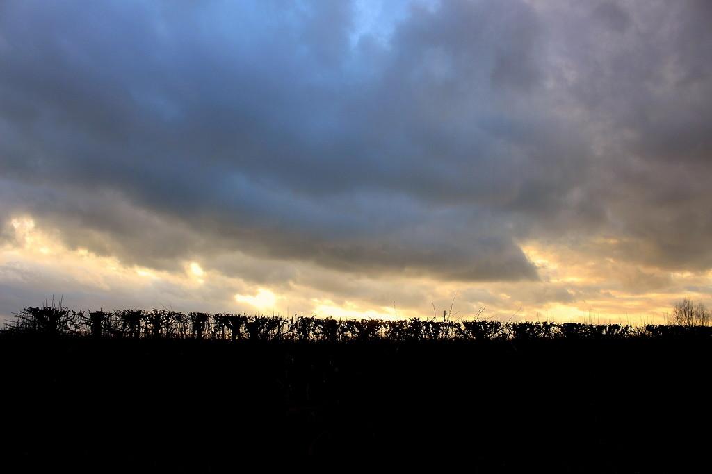 Sundown behind an orchard hedge.  by pyrrhula
