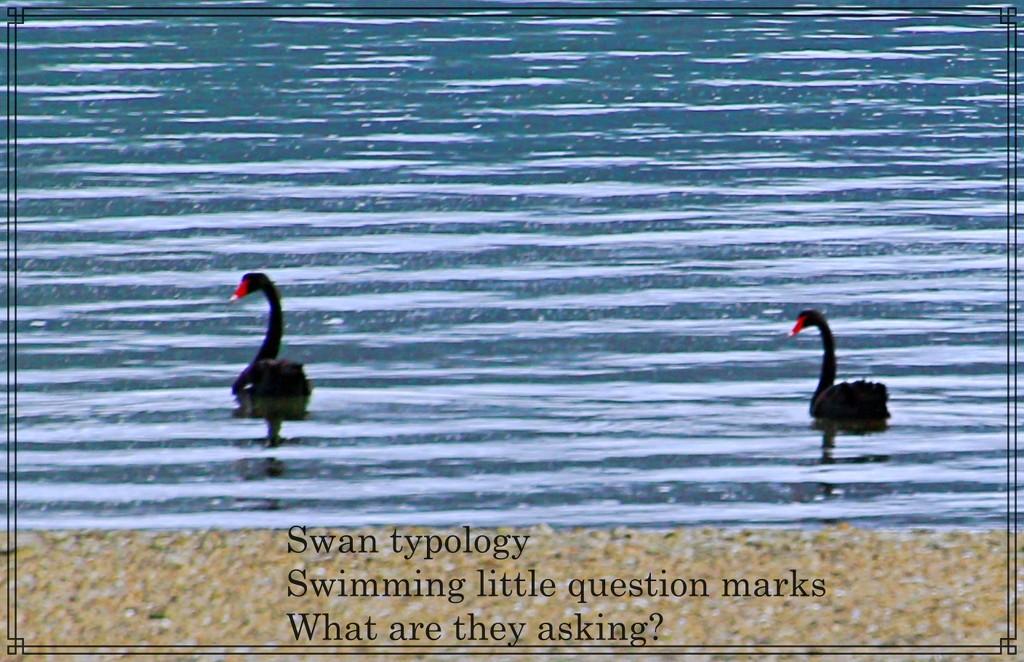 Swan typology by kiwinanna