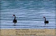 15th Jan 2020 - Swan typology