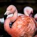 Flamingo Friday '20 03