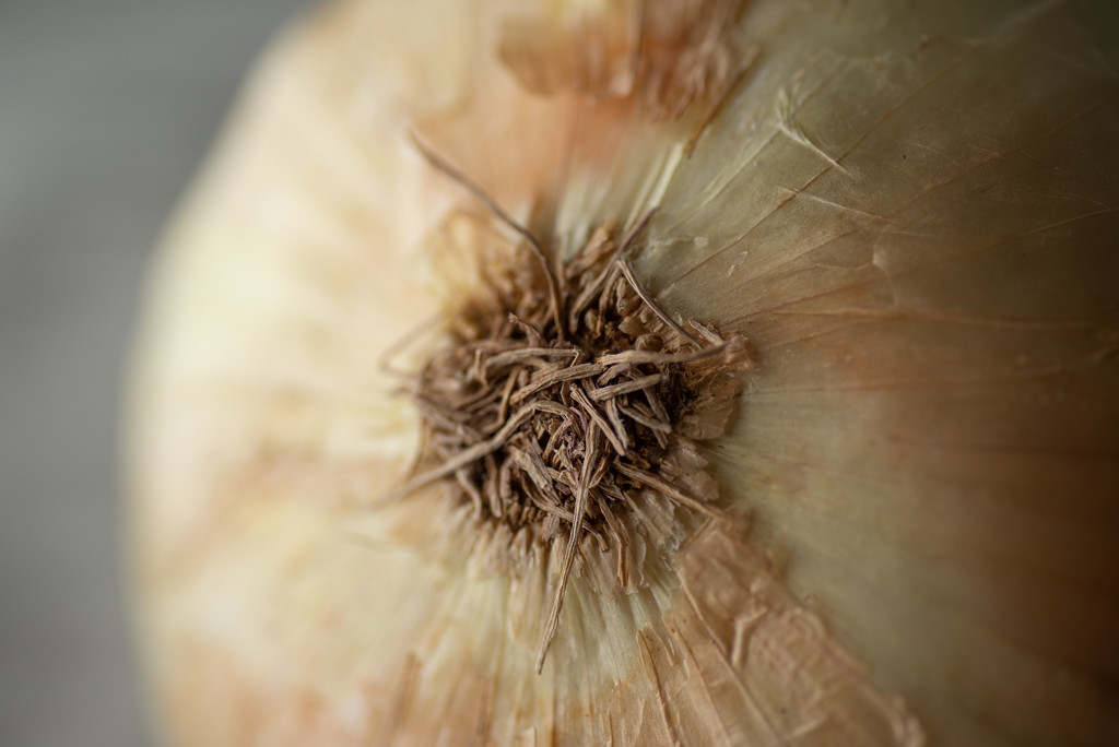 macro onion 1 by jackies365