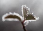 17th Jan 2020 - A white frost