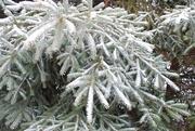 18th Jan 2020 - Winter's return