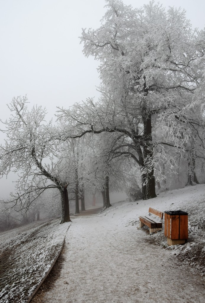 The forest under a white blanket by kork