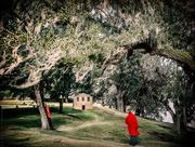18th Jan 2020 - red hoods