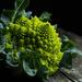 Romanesco broccoli by angelikavr