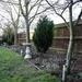 My Garden January 2020