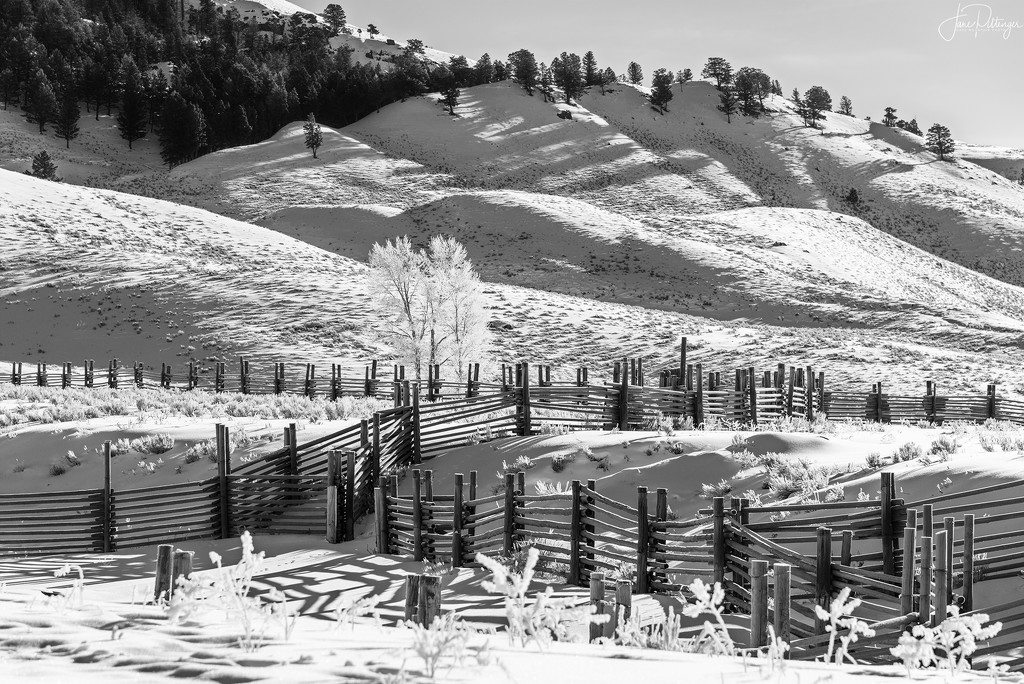 Fences and Hoar Frost At Yellowstone B and W by jgpittenger