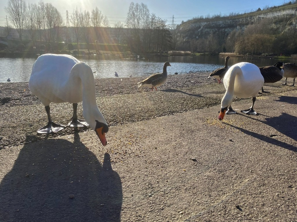 Sunray's and Swans by bizziebeeme
