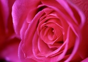 18th Jan 2020 - Pink