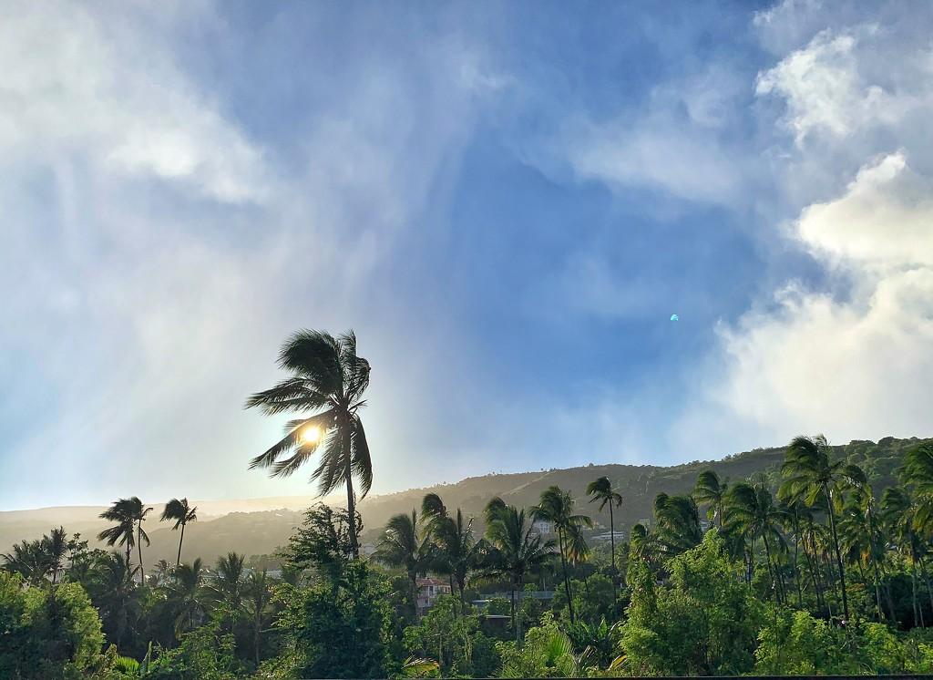 Palmtree in sunrise.  by cocobella